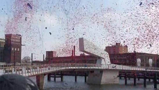Rijnhavenbrug-opening